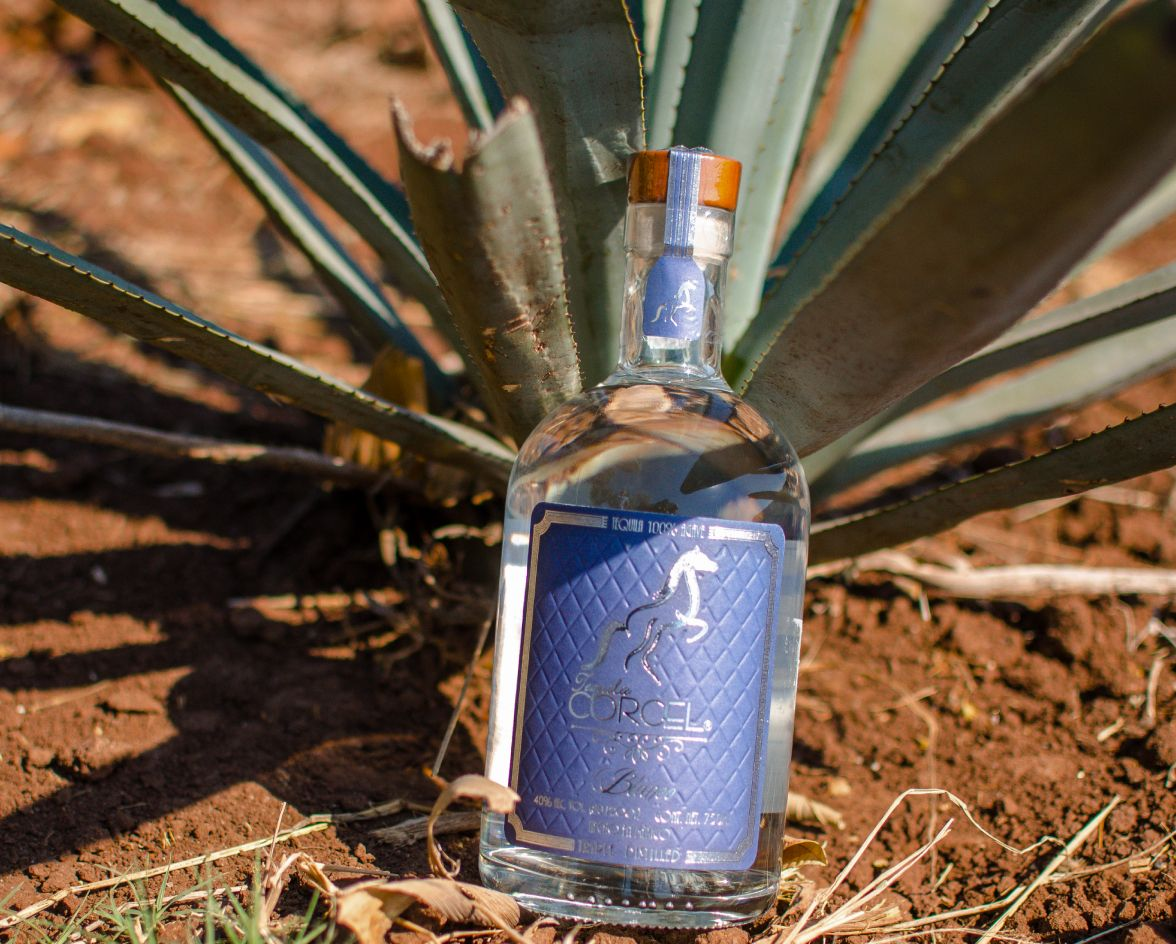 corcel tequila with agave plant